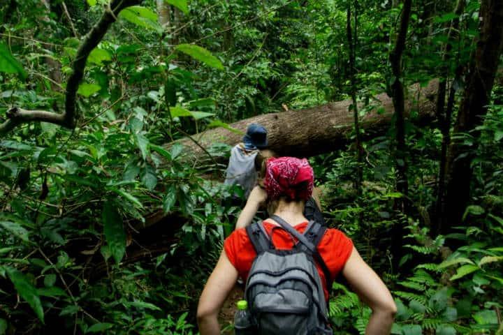 Sendero Interpretativo. Selva Lacandona. Chiapas. Foto. Viajes Info To Go.14