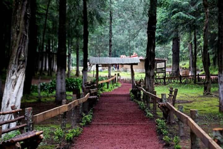 Sendero. Santuario de Luciernagas. Tlaxcala. Foto. Quadratín Tlaxcala. 6