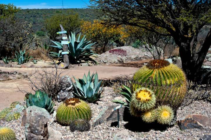 La primavera en México. Foto Vía Orgánica.