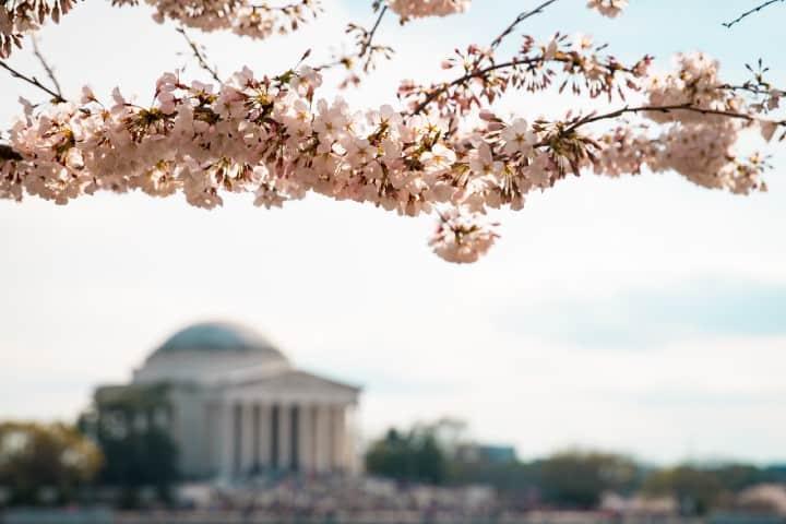 Washington D.C. Foto:  Ashton Bingham