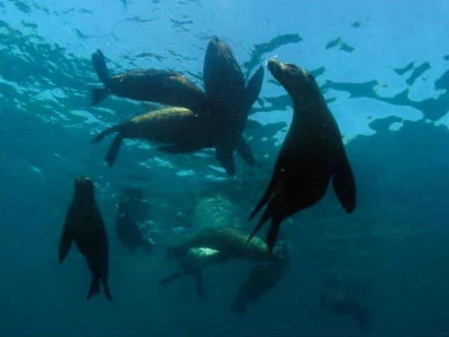 mar cortes04