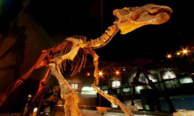 museo desierto01