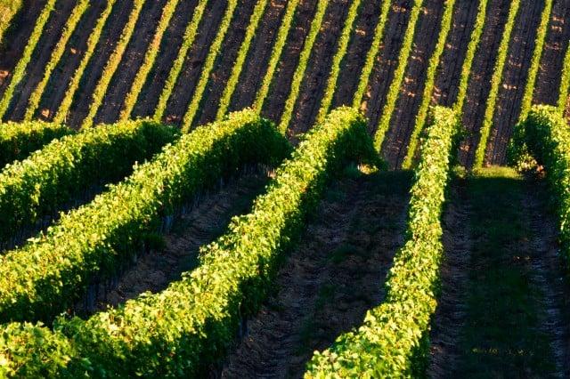 Toscana Italiana. Foto Archivo.