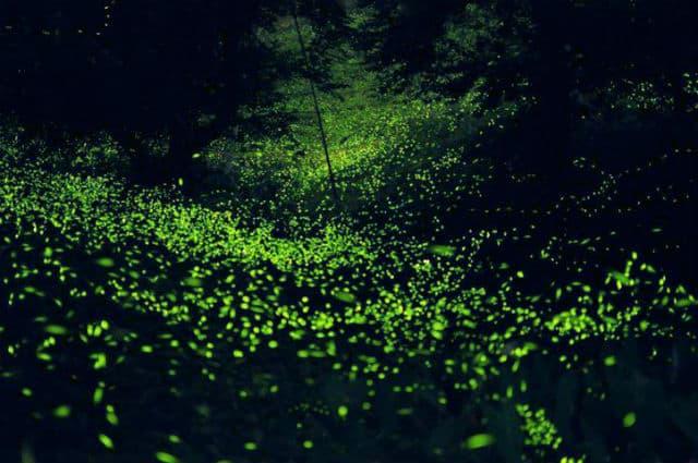 Wow un santuario de luci rnagas en tlaxcala Espectaculo de luciernagas en tlaxcala