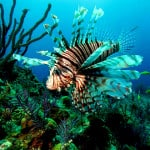 pez leon01