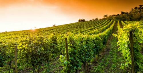 ruta vino romantica02
