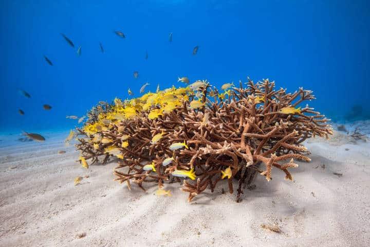 Arrecife de Coral. Isla Curazao del Caribe. Foto. Romona Robbins 7