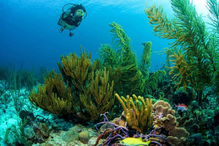 Arrecife. Isla Curazao del Caribe. Foto. Anne Fleur Eiff 4