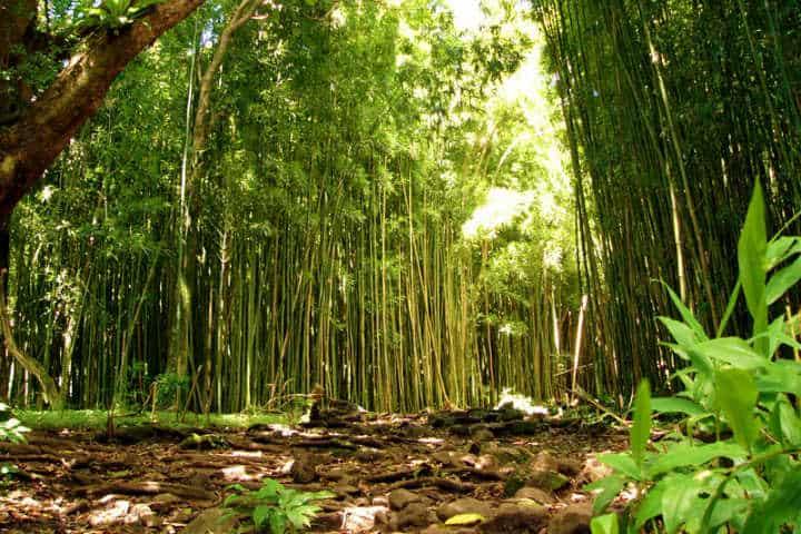 El Bosque de Bambú en Japón nos cautiva con sus vistas Foto Marty Gabel