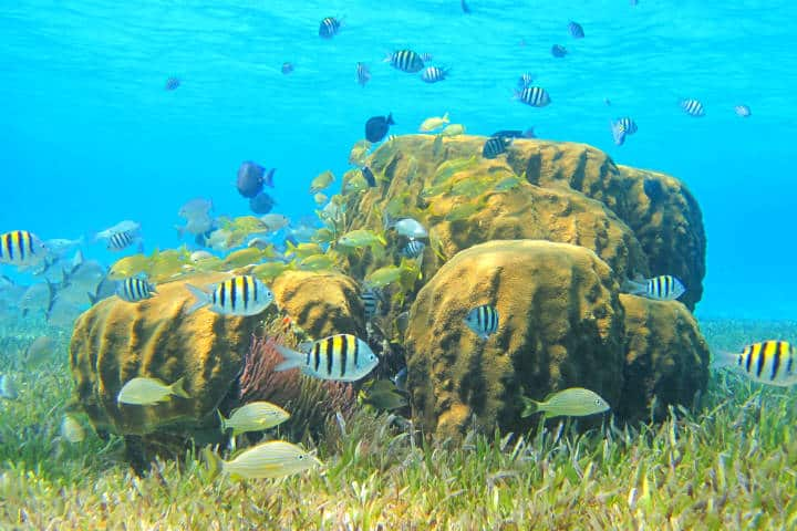 Arrecifes. Foto Fideicomiso de Promoción Turística Cozumel & Riviera Maya.