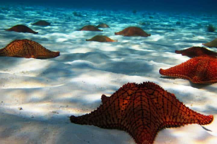 De mar. Foto Fideicomiso de Promoción Turística Cozumel & Riviera Maya.