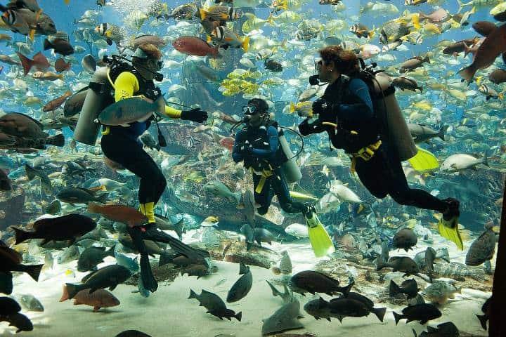 Hotel Atlantis. Foto: Atlantis, The Palm Vacaciones en Atlantis Las Bahamas