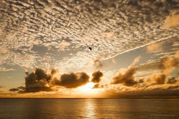 Isla de cocos. Foto: Thomas Reissnecker