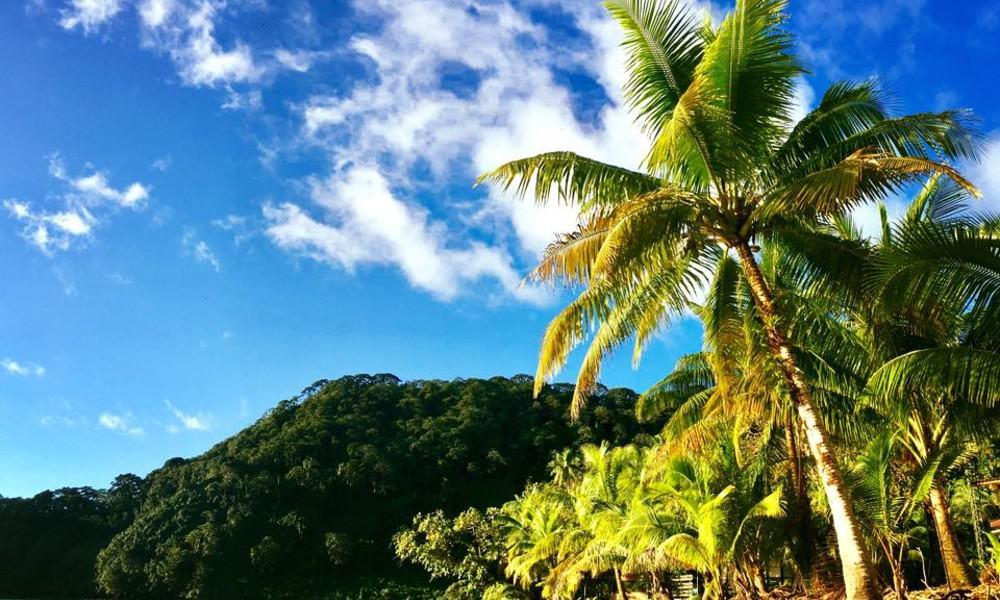 Isla del Coco. Foto: Parque Nacional Isla del Coco / Cocos Island National Park
