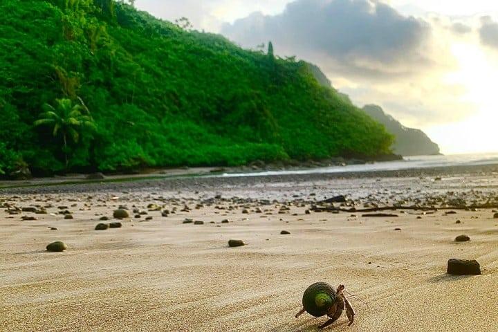 Isla del coco. Foto: MPM