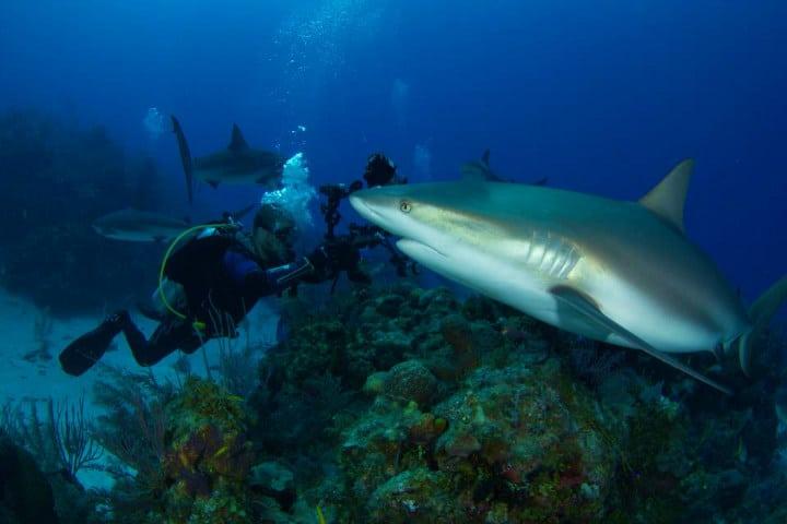 La vida marina en el Blue Hole es excepcional Foto Belize Diving Services