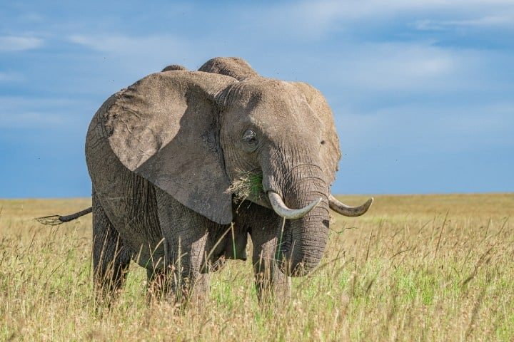 Masai Mara National Reserve, Kenya. Foto: Photos By Beks