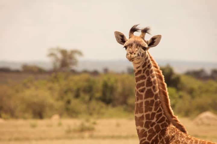 National Park, Nairobi, Kenya. Foto: Cody McLain
