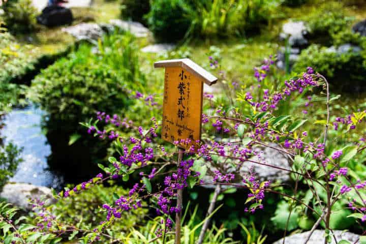 No dejes de descubrir el Bsque de Bambú en Japón Foto Nicholas Doherty