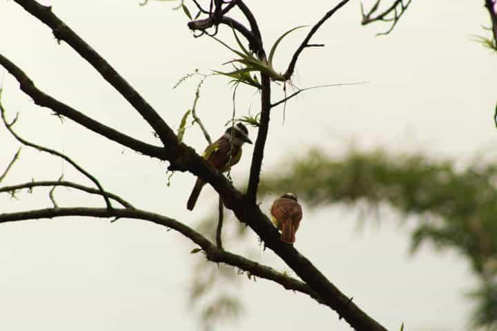 Pájaros. Chiapas. Foto Argovia Finca Resort 13