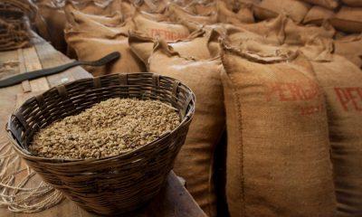 Portada. La Ruta del Café en Chiapas. Foto Cooltura Chiapas 12