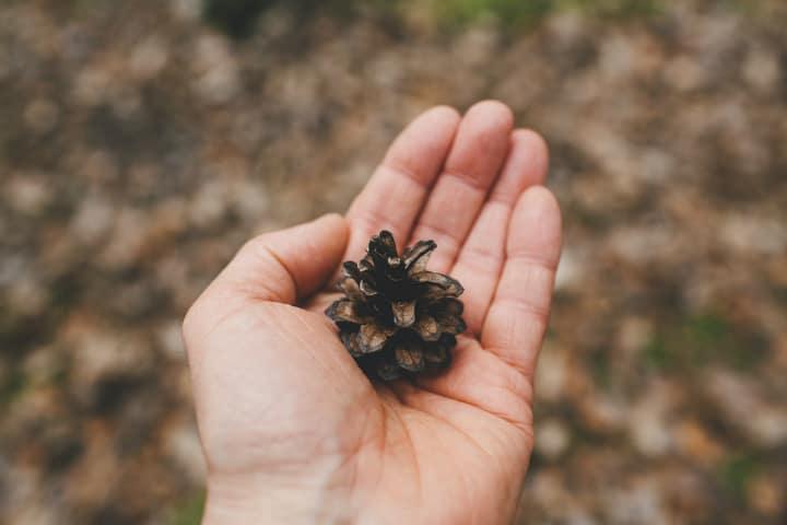 Respeto a la naturaleza. Foto Markus Spiske