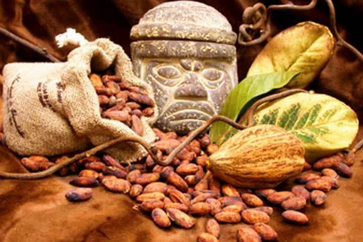 Sus avances ayudan a la producción del cacao mexicano Foto Comboni