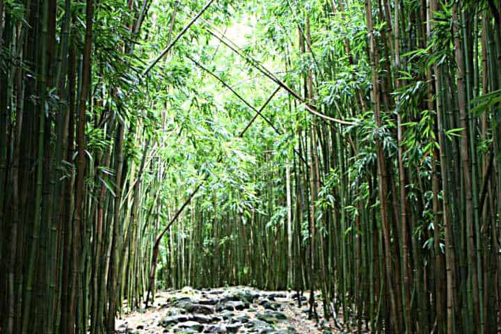 Sus senderos te guiarán a través del Bosque de Bambú en Japón Foto teacupfangirl
