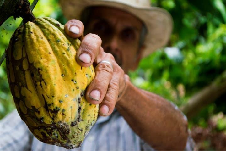 Te explicarán el proceso de selleción y cosecha del cacao en las Haciendas Cacaoteras en Tabasco Foto eliasfalla
