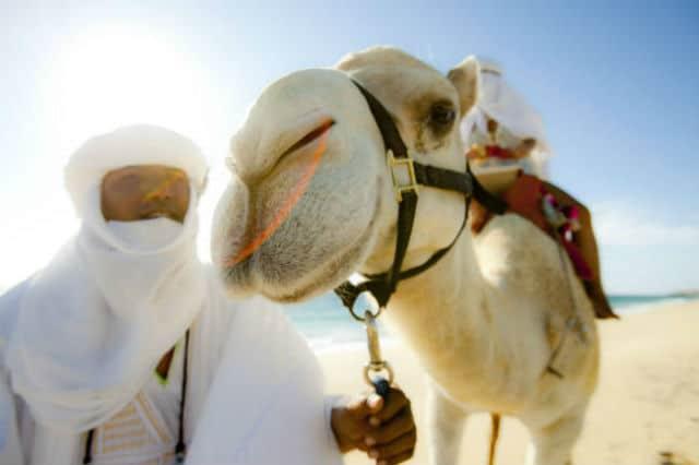 camellos loscabos01