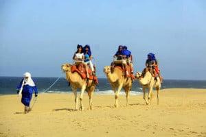 camellos loscabos07