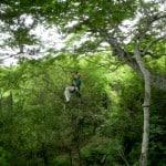canopy huanacoa05