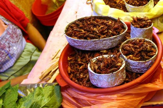 comida oaxaqueña13