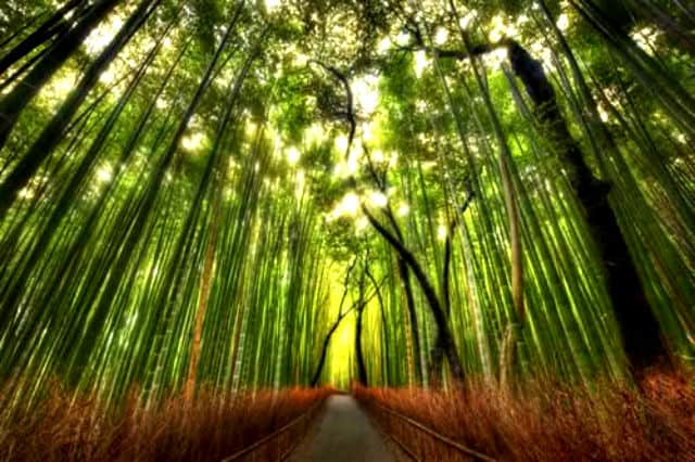 bosque bambu02