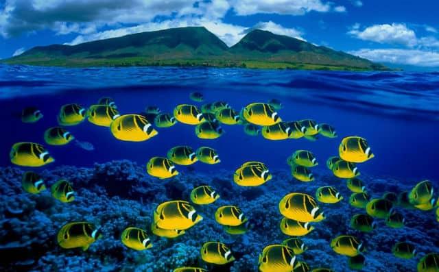 hawai01