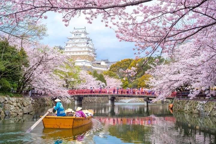 Bosque de Cerezos del Rio Toyohira FOTO: Traveler
