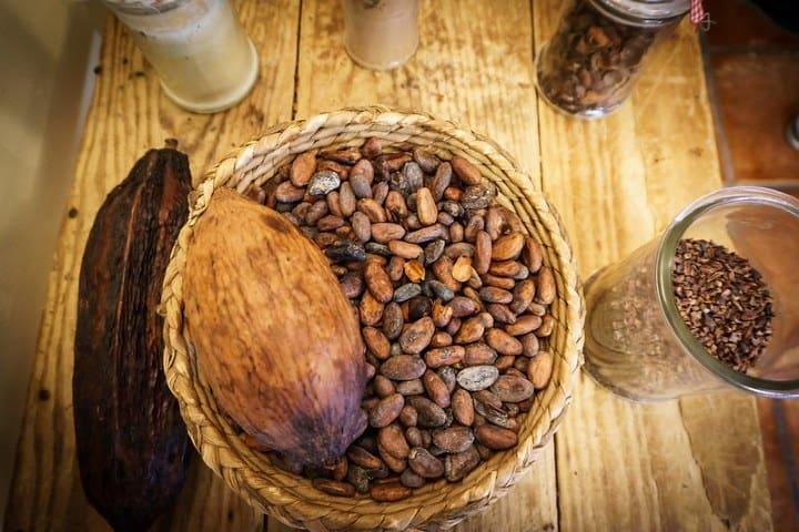 Cacao. Foto: Olga Pepe