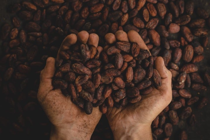 Cacao. Foto: Pablo Merchán Montes