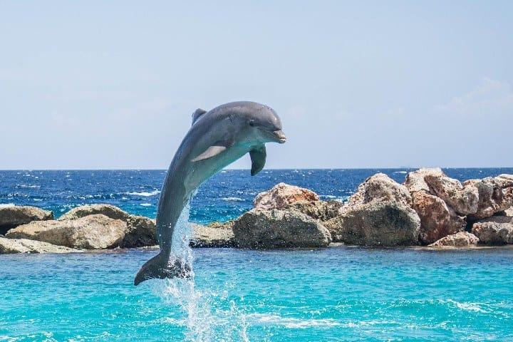Delfin. Foto: Michelle Maria