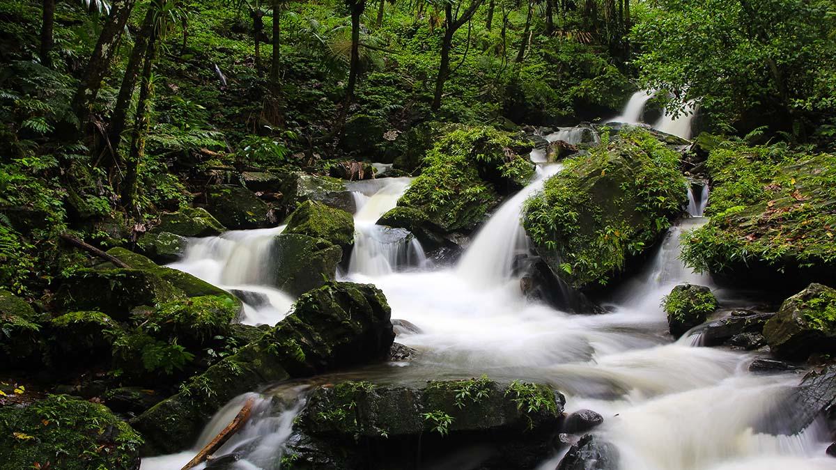 El Yunque Rainforest PR. Foto. Alexander Lamar