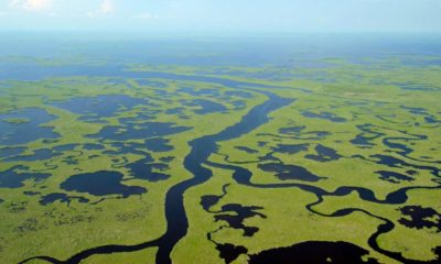 Everglades en Florida. Foto: goodnewsnetwork.org