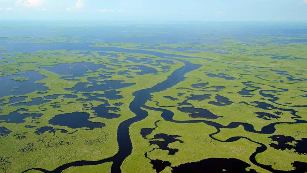 Everglades en Florida. Foto: goodnewsnetwork.org