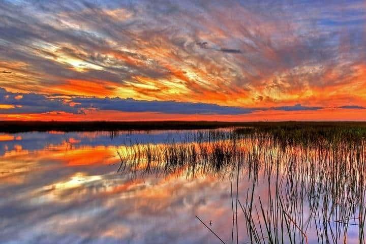 Humedales, Everglades en Florida