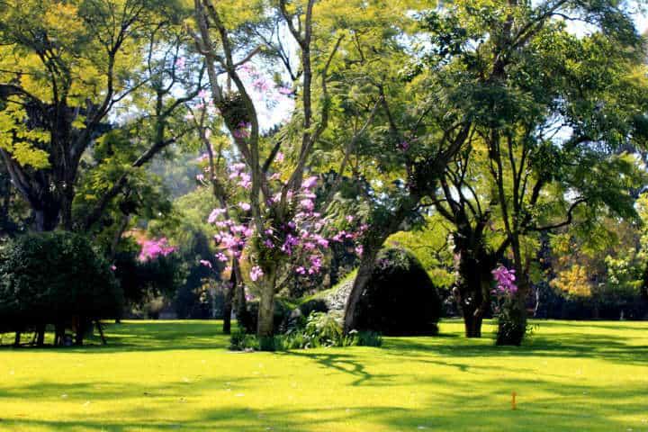 Jardines del Museo Dolores Olmedo Foto Margare Metcalfe