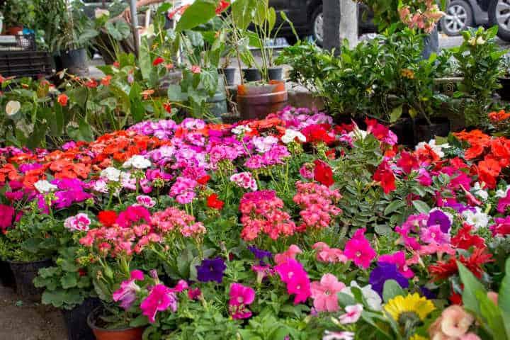 La floricultura es parte de Fortín.Foto.El Centro Noticias.2