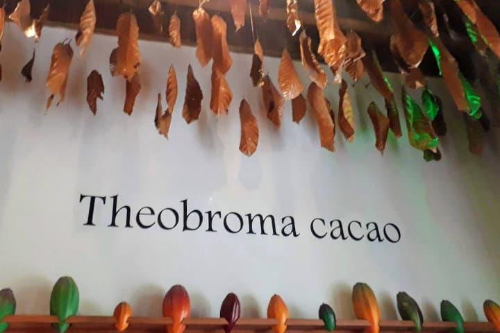 Letreros en el museo del chocolate.Foto.México Chulo.4