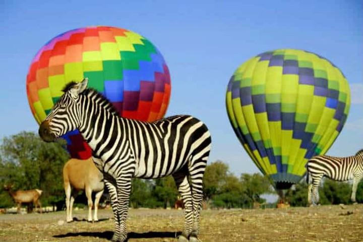 Los animalitos serán parte de tu momento especial Foto Archivo