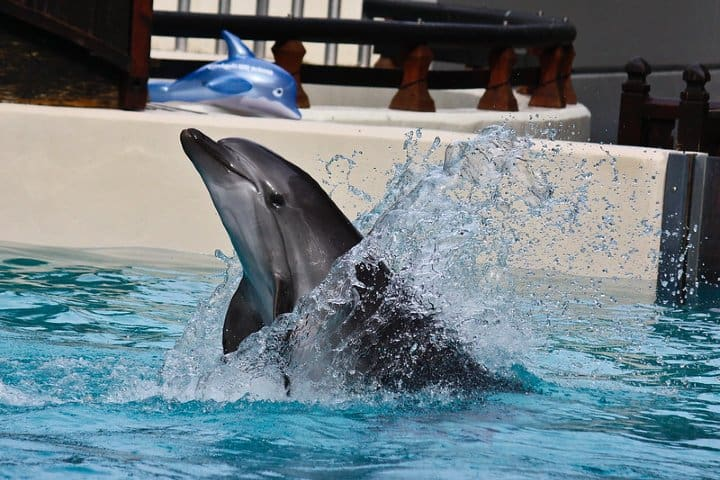 Nado con delfines. Foto: Drew XXX