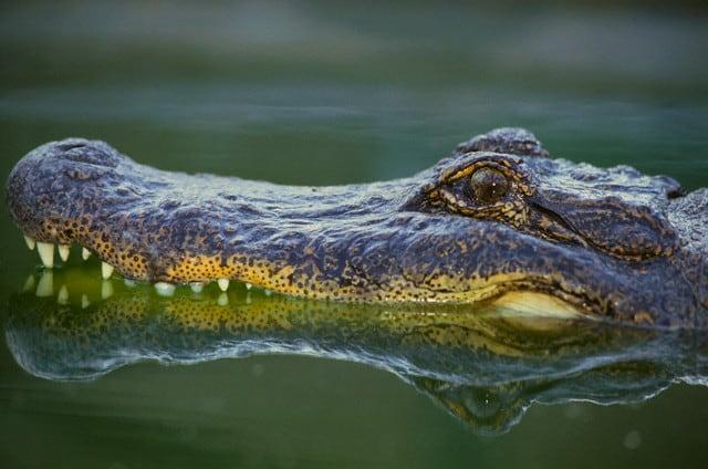 Everglades04