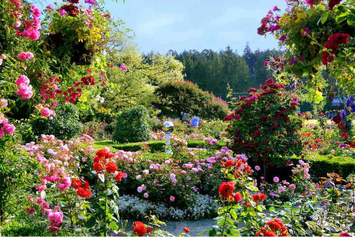 jardin de las rosas